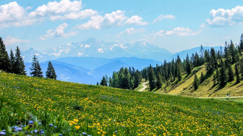 Höjdpunkter i Alpvärlden Mainau & Bernina Express